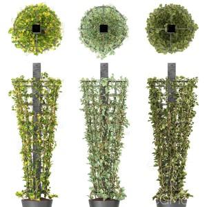 Plant On Column