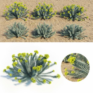 Euphorbia Rigida - Gopher Plant