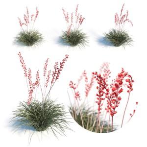 Hesperaloe Parviflora - Red Yucca