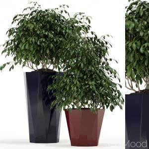 Plants Collection 102 Awesomeplanters