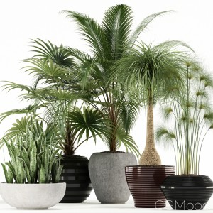 Plants Collection 103
