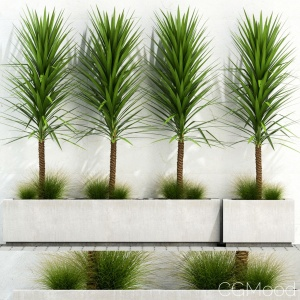 Plants Collection 105