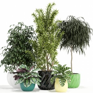 Plants Collection 111