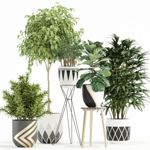 Plants Collection 112