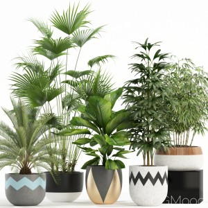 Plants Collection 113