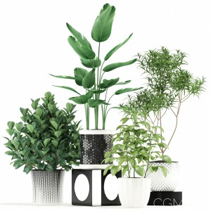 Plants Collection 118