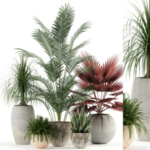 Plants Collection 122