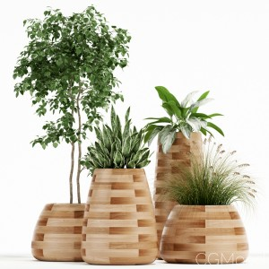 Plants Collection 129 Indigenus Tuber