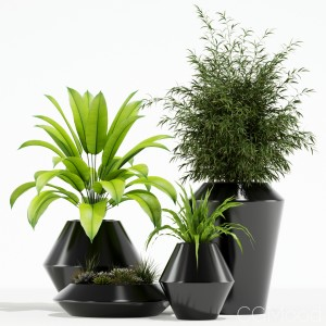 Plants Collection 133 Westelm Modern Planters