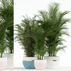 Plants Collection 136