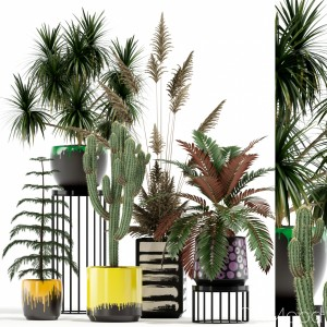 Plants Collection 139