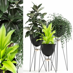 Plants Collection 141 Madre Selva Grande