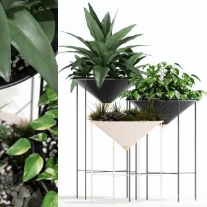Plants Collection 142 Artica