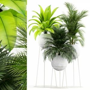 Plants Collection 145 Piedra Luna