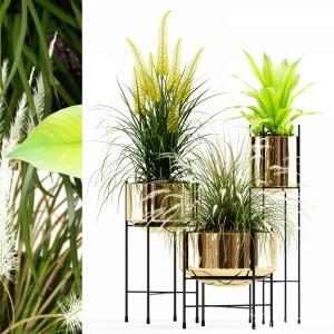 Plants Collection 146 Agata