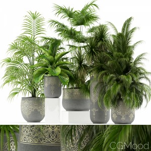 Plants Collection 147 Handmade Pots East Style