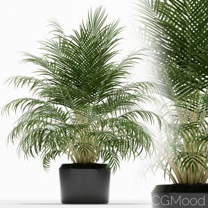 Plants Collection 149