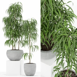 Plants Collection 157