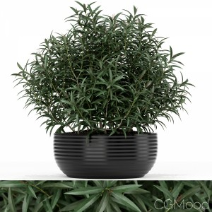 Plants Collection 169