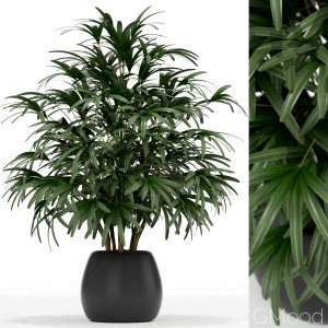 Plants Collection 170