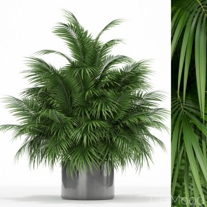 Plants Collection 177