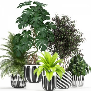 Plants Collection 179