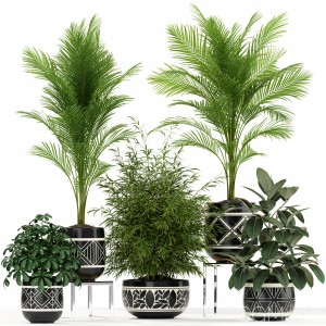 Plants Collection 181