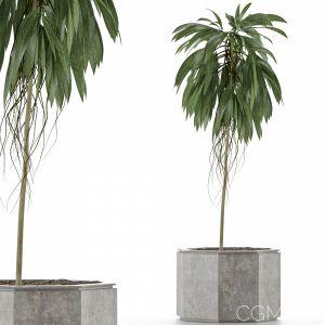 Single Plant 01