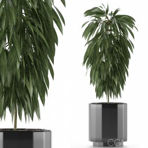 Single Plant 02