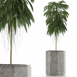 Single Plant 03