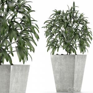 Single Plant 05