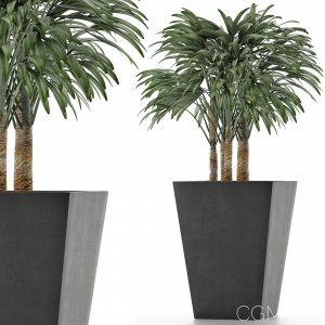 Single Plant 07