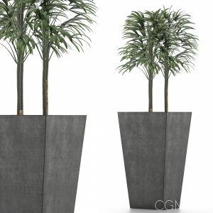 Single Plant 08