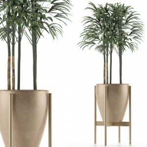 Single Plant 10