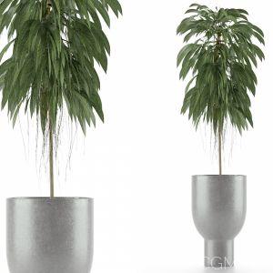 Single Plant 11