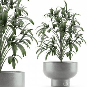 Single Plant 12