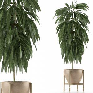 Single Plant 13