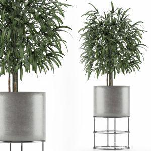 Single Plant 14