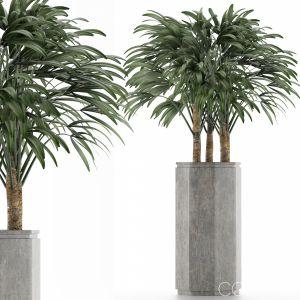 Single Plant 15