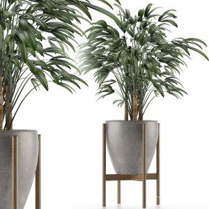 Single Plant 16
