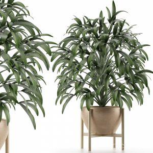 Single Plant 17