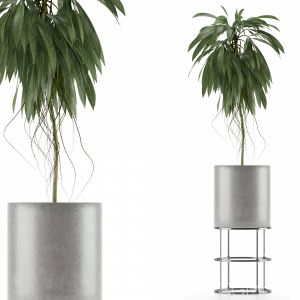 Single Plant 18