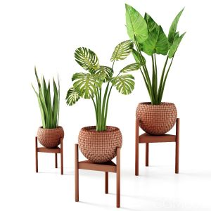 Set Vases-no2- Wicker Vase By 3 Plant