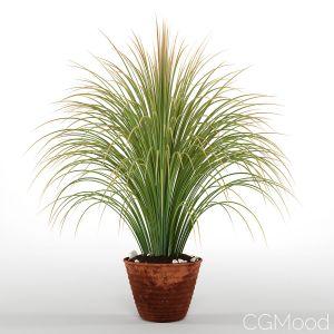 Bouquet Grass