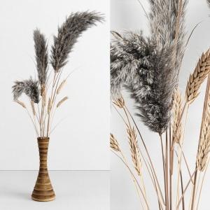 Dry Plant Decorativ