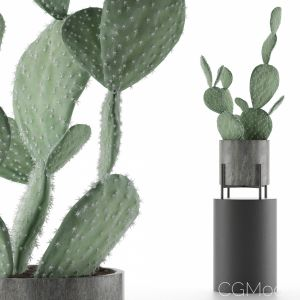 House Plant 37
