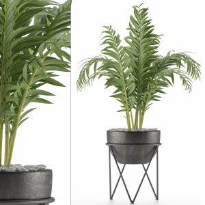 House Plant 39