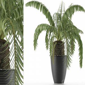 House Plant 41