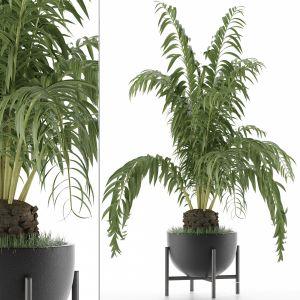 House Plant 42