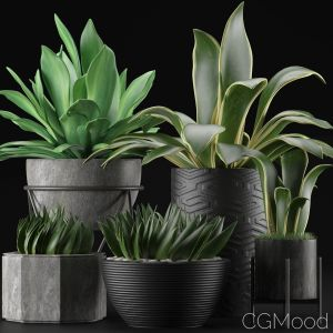 Plants Collection 15